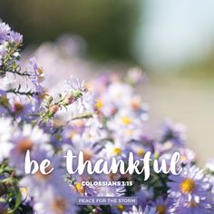 And let the peace of God rule in your hearts, to which also you were called in one body; and be thankful. Colossians 3:15 (NKJV)