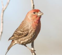Finches - a variety of size and colors.  Tiny and quick moving, pretty songs.