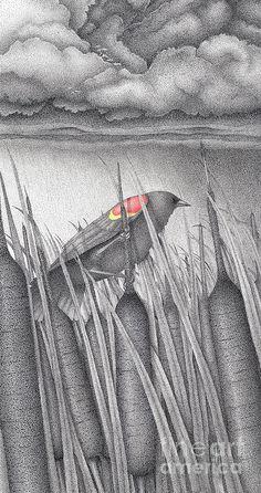 Red- winged Blackbird