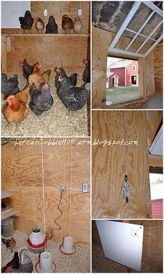 Chicken coop ideas and other chicken related posts.