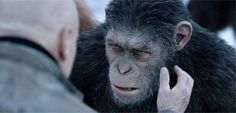 Review #The Awesome 'War for the Planet of the Apes Concludes an Impressive Trilogy #NewMovies #awesome #concludes #impressive #planet