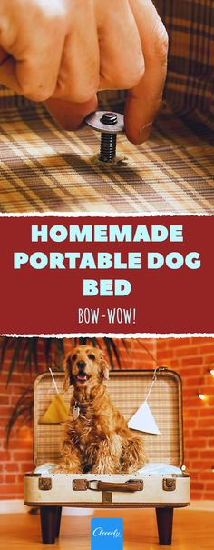Homemade Portable Dog Bed   #cleverly #dog #diy #dogbed #crafts #diyprojects #diycrafts #artsandcrafts #pinterestcrafts #portabledogbed Diy Craft Projects, Diy Crafts, Hanger Bolts, Diy Dog Bed, Pinterest Crafts, Old Suitcases, Bow Wow, Furniture Legs, Homemade Dog