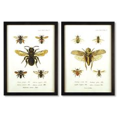 Found it at Wayfair - Bee 2 Piece Framed Graphic Art Set