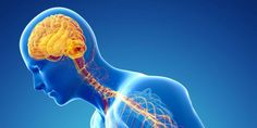 Reprogrammed stem cells relieve Parkinson's symptoms in trials Type 2 Diabetes Treatment, Diabetes Treatment Guidelines, Liquid Diet Plan, Deep Brain Stimulation, Chronic Kidney Disease, Parkinson's Disease, Autoimmune Disease, Causes Of Diabetes, Restless Leg Syndrome