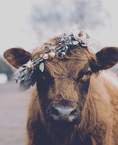 (disambiguation) Cow is a colloquial term for cattle, and the name of female cattle. Cow, cows or COW may also refer to: Farm Animals, Animals And Pets, Funny Animals, Cute Animals, Vegan Animals, Wild Animals, Black Animals, Nature Animals, Cute Creatures