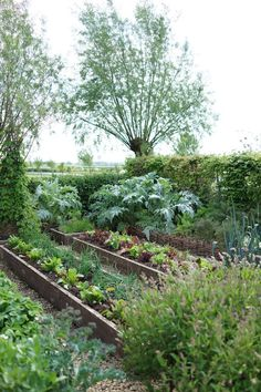 Potager Garden Raised bed with wood chip walkway Backyard Vegetable Gardens, Potager Garden, Vegetable Garden Design, Balcony Garden, Garden Beds, Garden Landscaping, Permaculture Garden, Allotment Gardening, Garden Sofa