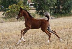 HE44197E5 - Potra PRÁ Disponible Horses, Animals, Horses For Sale, Equestrian, Budget, Animales, Animaux, Animal, Animais