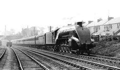 2005 Thane of Fife - Steam Locomotive Company Steam Railway, Thomas The Tank, Steam Locomotive, Dundee, A4, Diesel, British, Around The Worlds, History