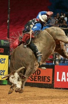 Bull Riding Quotes, Cow Cat, Rodeo Events, Bucking Bulls, Cowboy Pictures, Bull Cow, Rodeo Cowboys, Rodeo Life, Bull Riders