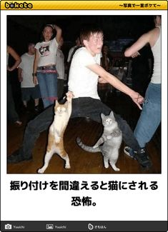 Never challenge Ninja cats to a dance-off. Never challenge Ninja cats to a dance-off. Never challenge Ninja cats to a dance-off. I Love Cats, Crazy Cats, Funny Cute, The Funny, Funny Animals, Cute Animals, Party Animals, Funniest Animals, Animal Memes