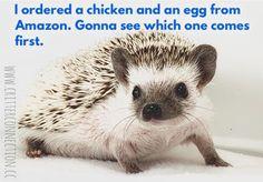 Hedgehog, Connection, Funny Quotes, Jokes, Lol, Humor, Cute, Funny Phrases, Husky Jokes