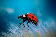 Ladybug by Omid Mirshamsi on 500px