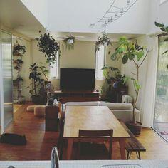 kuuuuさんの、部屋全体,観葉植物,植物,NO GREEN NO LIFE,のお部屋写真