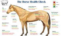 Bilderesultat for oversikt sykdom symptomer hest Shiatsu, Horse Information, Horse Anatomy, Horse Care Tips, Horse Facts, Health Images, Horse Camp, Horseback Riding, Beautiful Horses