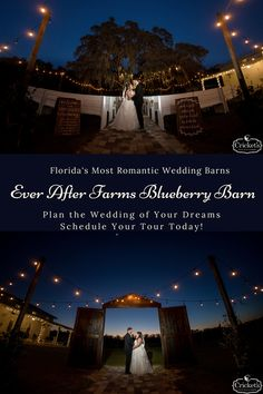 The Best Wedding Venues Florida Has to Offer Click for Details and Pricing Now Offering Virtual & On-Site Tours Florida Wedding Venues, Best Wedding Venues, Wedding Vows, Red Wedding, Perfect Wedding, Wedding Day, Wedding Centerpieces, Wedding Bouquets, Wedding Dresses