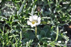 Eisige, aber dennoch nicht weniger warme Grüße am natureisatopmodel -Donnerstag. Ich sag es durch die Blume! =)