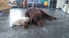 Hunde Foto: Petra und Henry und Maddie - Kuschelzeit  Hier Dein Bild hochladen: http://ichliebehunde.com/hund-des-tages  #hund #hunde #hundebild #hundebilder #dog #dogs #dogfun  #dogpic #dogpictures