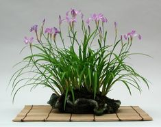 Dan Barton's accent plant - Iris shown here planted in another example of a slab that has been manipulated and pinched, rippled around the edges to form a nice design.