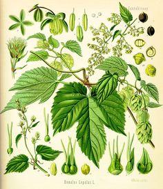Schoolplaat botanisch