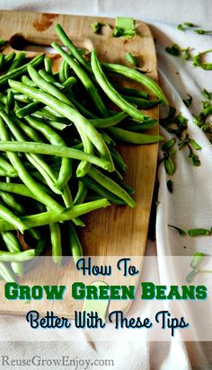 Thinking of growing green beans? They are pretty easy and a great first plant for someone just getting into gardening. Head over and I will show you How To Grow Green Beans Better With These Tips!