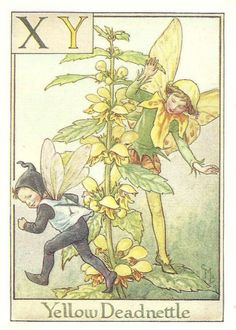 http://www.wellandantiquemaps.co.uk/lg_images/The-Yellow-Deadnettle-Fairy.jpg