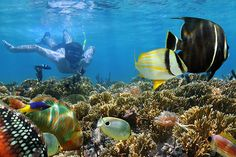 Dolphin Full Day Snorkeling Tour From Hurghada , Cozumel, Cancun, Water Sports Activities, Marsa Alam, Visit Mexico, Colorful Fish, Cruise Travel, Turquoise Water, Ubud