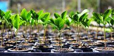 BioOrbis: Berçário de árvores