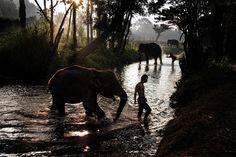 Food, elephants and landscape.
