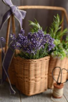 Basket of Lavender Flowers with Spool of Twin & Scissors .
