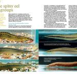 "AMAZONAS Magazine ""SPINY EELS"" Inside Look! Online Calendar, Event Calendar, Event Organiser, Event Organization, Home Aquarium, Aquarium Fish, Aquarium Maintenance, Floating Plants, Digital Archives"