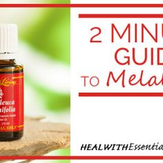 2 Minute Guide to Melaleuca Essential Oil