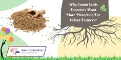 Why #Cumin #Seeds #Exporters Want More Protection For Indian Farmers?