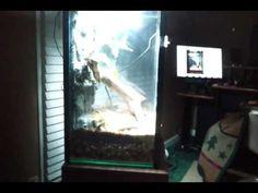 10 Gallon Fish tank to Vertical terrarium conversion Frog Habitat, 10 Gallon Fish Tank, Rock Wall, Tree Frogs, The Rock, Terrarium, Habitats, Aquarium, Future