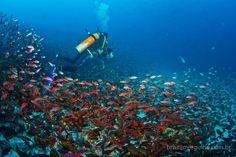 Uma explosão de cores, vida marinha e natureza no Equador.