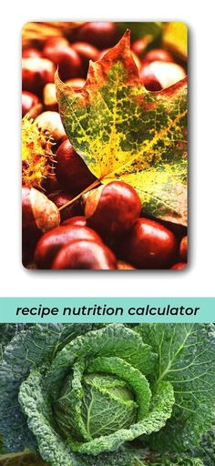 Coypal Photos #Nutrition 997390 003 Origi coloured 98p #nutrition - spreadsheet definition quizlet