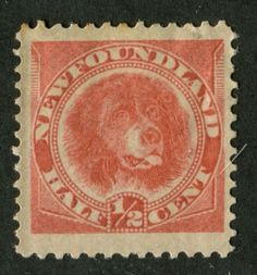 Newfoundland Dog as shown on this Newfoundland stamp issue from 1887.