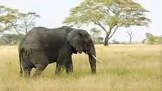 wallpapers free elephant  (Cadman Gordon 5120x2880)
