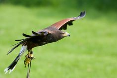 Meet the Birds of Prey is a crowdfunding project bringing nature to the young & old. Conservation via education. https://www.indiegogo.com/projects/meet-the-birds-of-prey/x/8570082 #wildlife #birdsofprey #crowdfunding