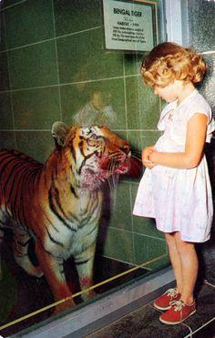When Susie met the Bengal Tiger.