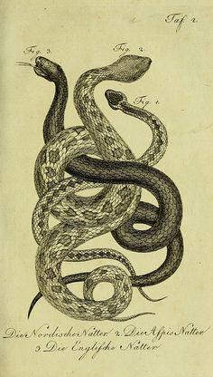 Herrn de la Cepede's Naturgeschichte der Amphibien, oder der enerlegenden vierfussigen Thiere und der Schlangen v.3