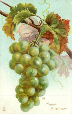 A HAPPY BIRTHDAY  bunch of  green grapes hanging from vine