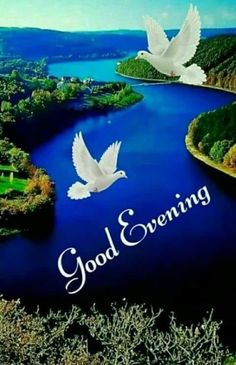 Good Evening Messages, Good Evening Wishes, Good Evening Greetings, Good Night Wishes, Good Night Quotes, Romantic Messages, Good Morning Sister, Good Morning Love, Good Morning Flowers