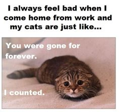 And then hug my kitty and promise never to leave again.