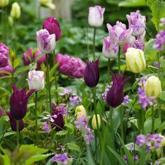 Collection+Tulipes+bucoliques