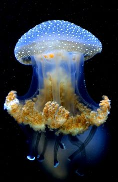 Jelly fish - nice to look at - not to touch. This could be a Medusa — Queen Jellyfish and if so, is edible — best left to the experts to decide.