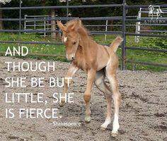 Fierce filly!!