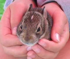 Someone found a baby bunny on the farm. What to do?