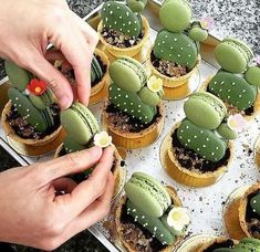 Have any green macarons on hand? Try out these adorable cacti macaron tarts by… Cute Food, Yummy Food, Yummy Yummy, Just Desserts, Dessert Recipes, Macaroon Recipes, Drink Recipes, Dinner Recipes, Creative Food