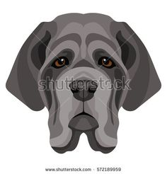 Vector grey neapolitan mastiff face dog symbol of 2018 new year