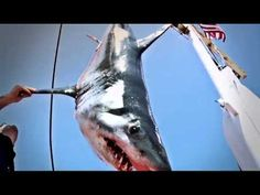 An estimated 100 million sharks are killed every year around the world! HELP US CANCEL NBC SHARK HUNTERS!!
